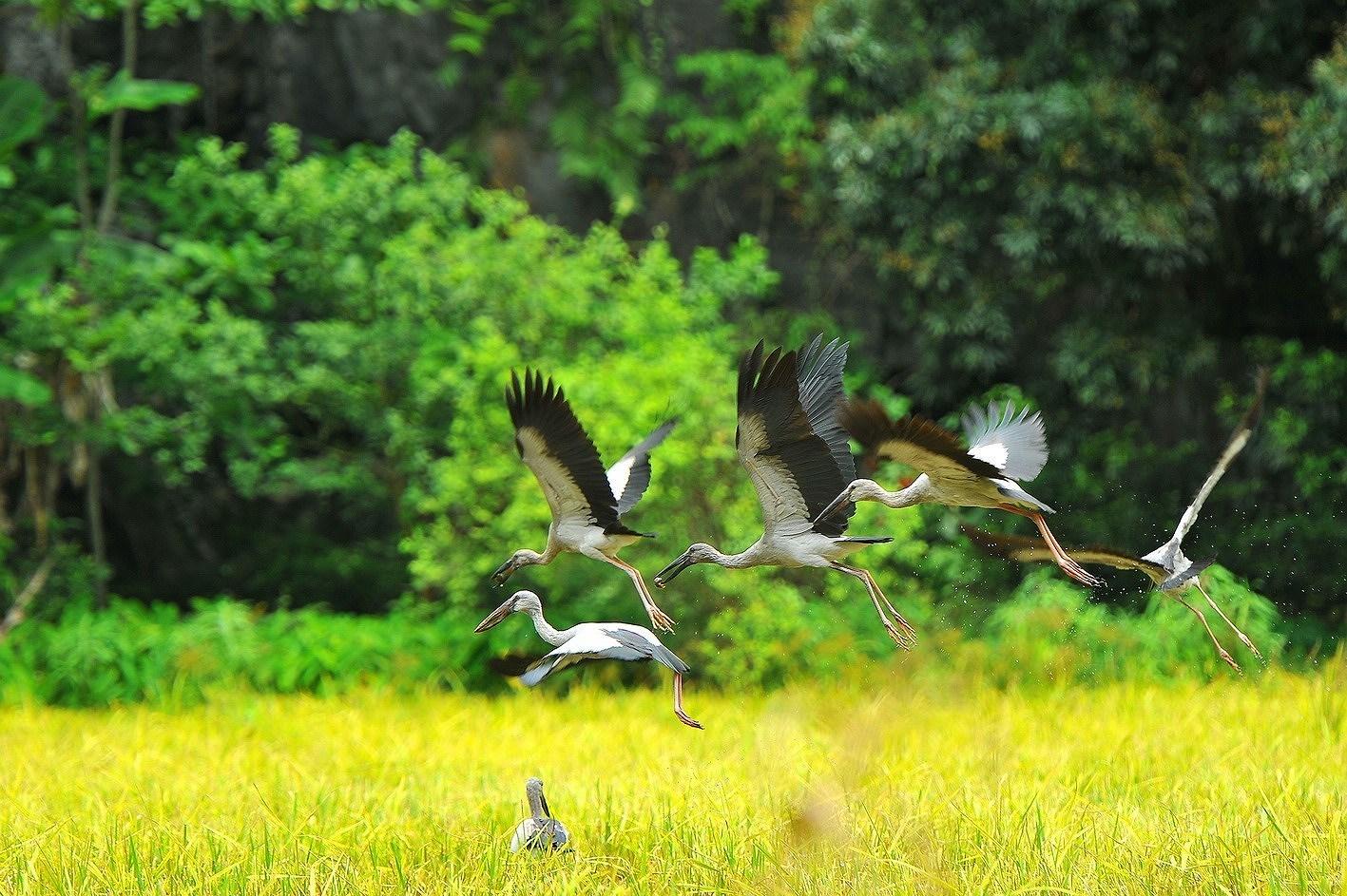 Ninh Binh – a tourist magnet hinh anh 4